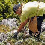 Specialistët: Po zhduken bimët medicinale