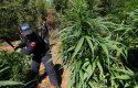 """""""Marijuana-lekët, lekët-pushtetin, pushteti blen"""", kështu ndodh në zgjedhje"""