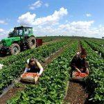 Ndryshimet fiskale/ Reagojnë fermerët, protestojnë duke...