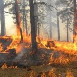 Korçë/ Zjarri masiv përfshin pyjet prej disa orësh