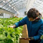 Gjermania jep 2 mln euro për bujqësinë shqiptare