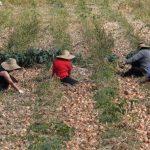 BSH: Ndërmarrjet bujqësore nuk marrin kredi nga bankat
