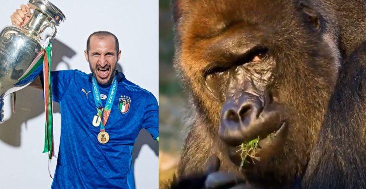 chiellini gorilla e1626199051442